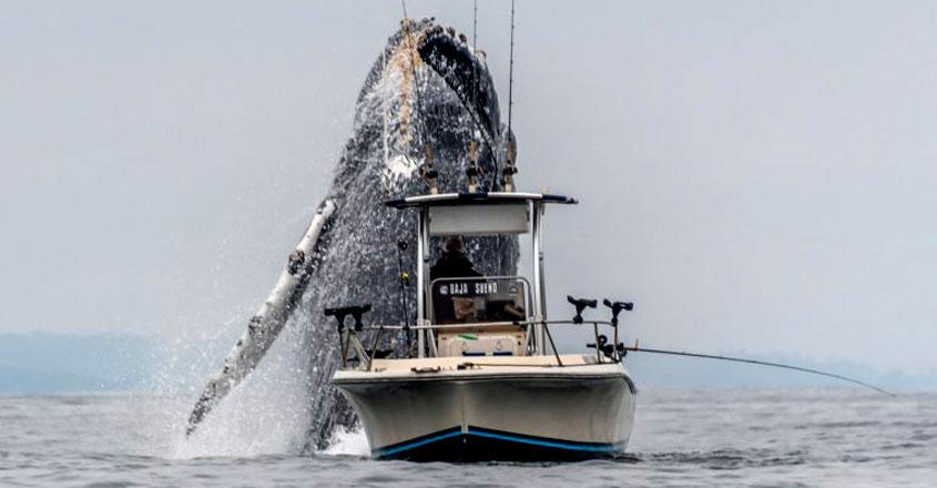 blue-whale-jump
