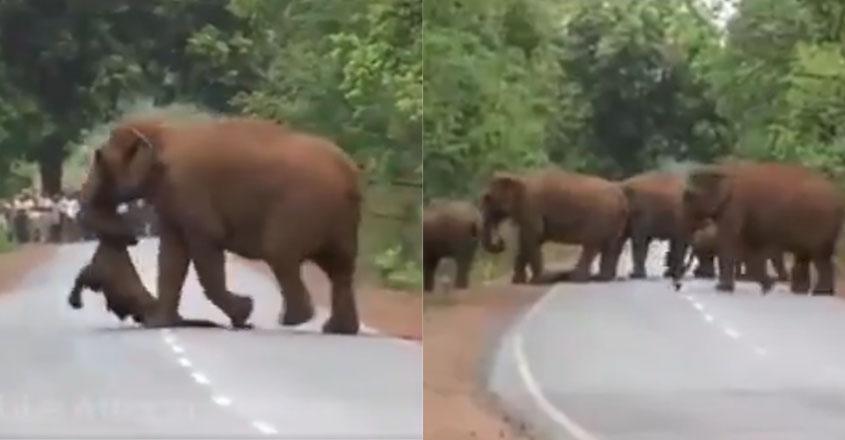 elephant-child-death