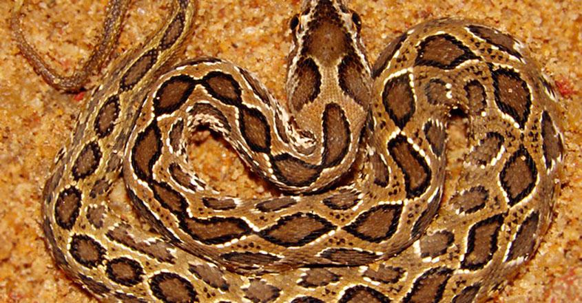 viper3