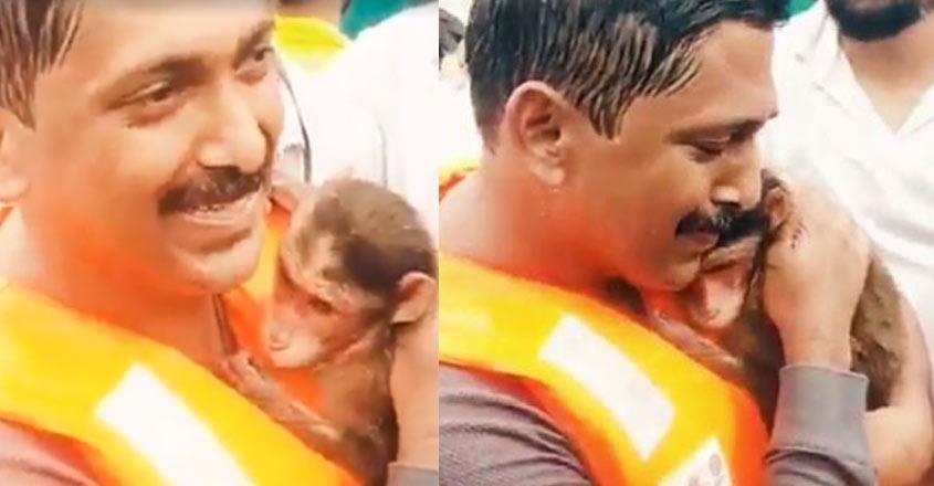 monkey-rescue