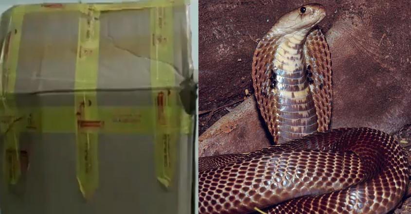 cobra-in-packet