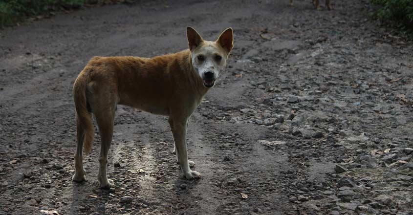 stray-dog-attack