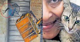 50 അടി ഉയരത്തിൽ പൂച്ച; കൊച്ചി നഗരം സാക്ഷിയായത് സംഭവബഹുലമായ മണിക്കൂറുകള്ക്ക്; വിഡിയോ