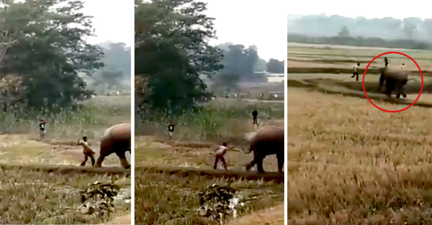 man-escapes-after-hitting-innocent-elephant-in-disturbing-viral-video-internet-is-furious