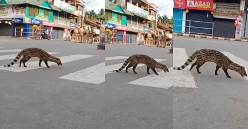 kozhikode-animal-video