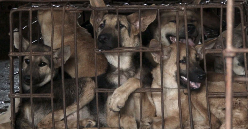dog-meat-fest-