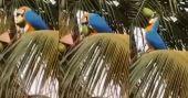 തെങ്ങില് നിന്ന് കരിക്ക് കൊത്തി കുടിക്കുന്ന തത്ത; വൈറല് വിഡിയോ
