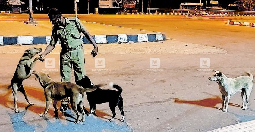 palakkad-home-guard-feed-stray-dogs.jpg.image.845.440