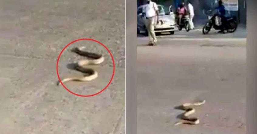 cobra-on-the-road-brings-traffic-to-an-abrupt-halt-in-udupi.jpg.image.845.440