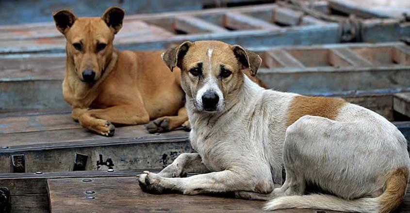dog-mumbai-attack