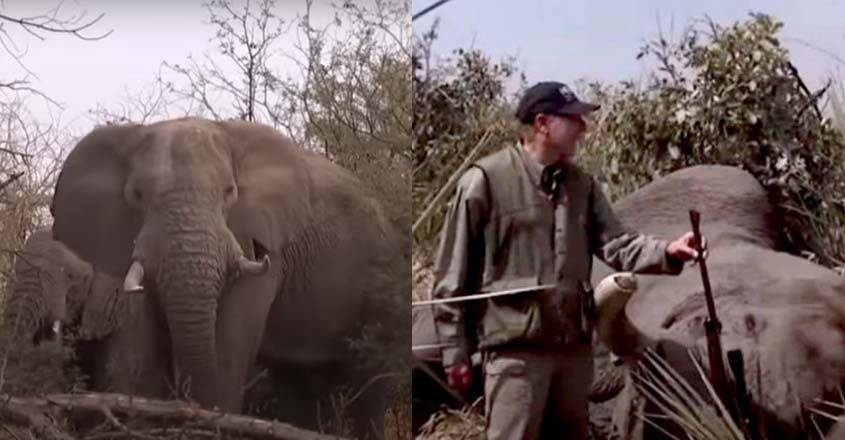 elephant-new-video