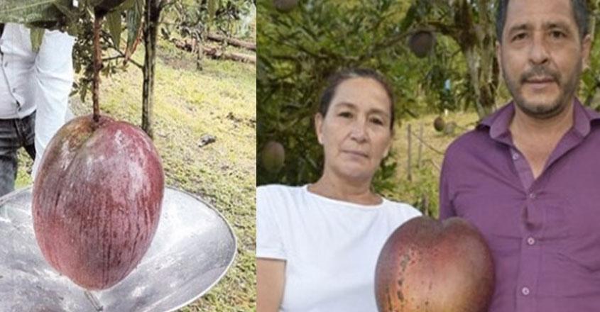 heavy-mango