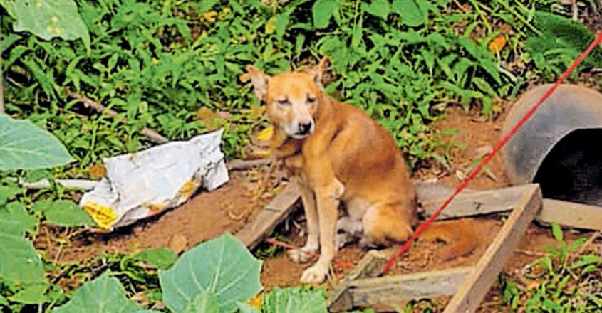 dog-bruno