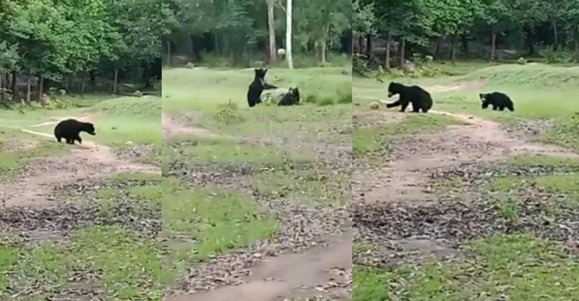 bear-14