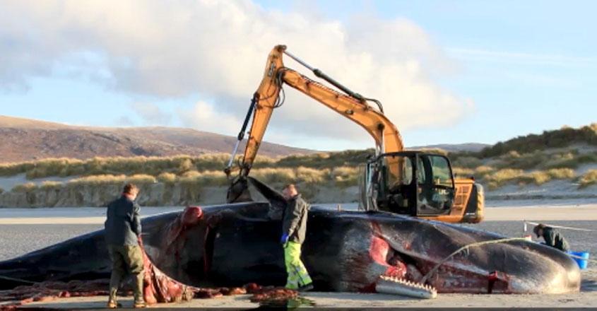 whale-sea-waste