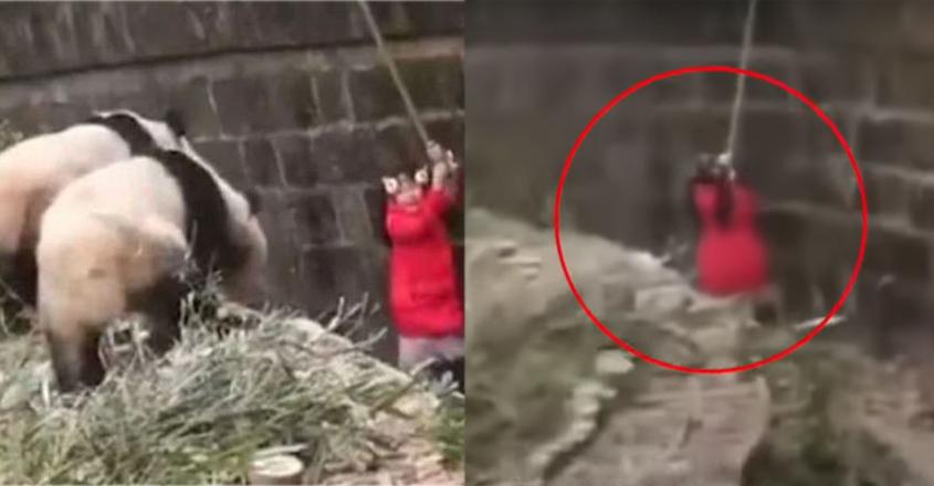 girl-panda