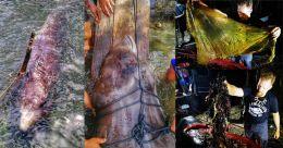 കുട്ടിത്തിമിംഗലത്തിന്റെ വയറ്റിൽ 40 കിലോ പ്ലാസ്റ്റിക്; ചത്തത് കൊടുംവേദന അനുഭവിച്ച്; കണ്ണീർ