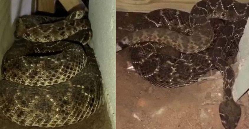 snake34