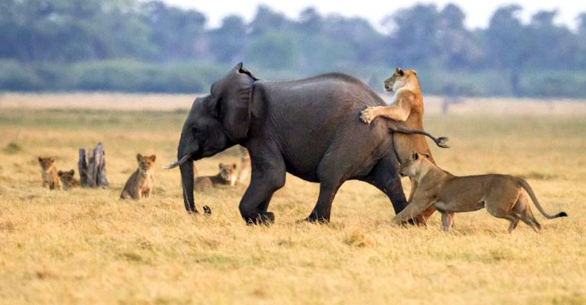elephant-lion-park-1