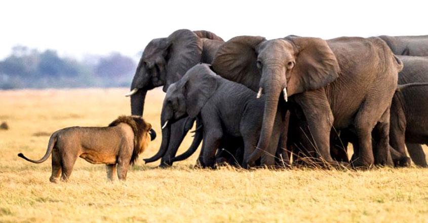 elephant-lion-park-2