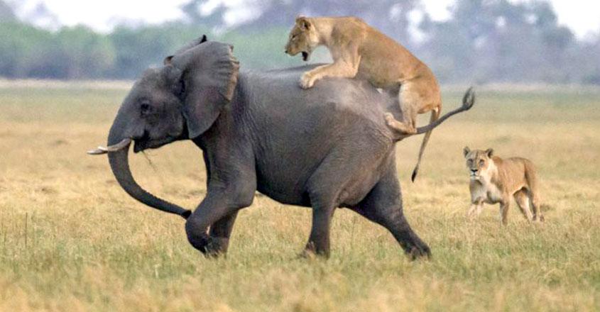 elephant-lion-park