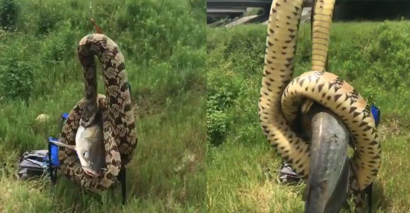 snake-fishing-net