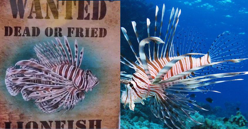 lionfish19