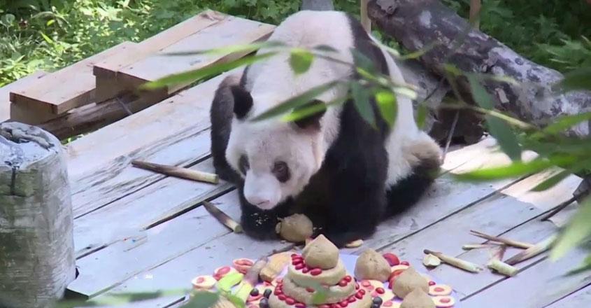 panda-web