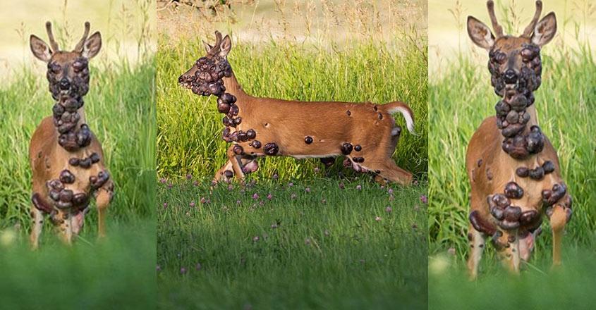 deer-life-social-media
