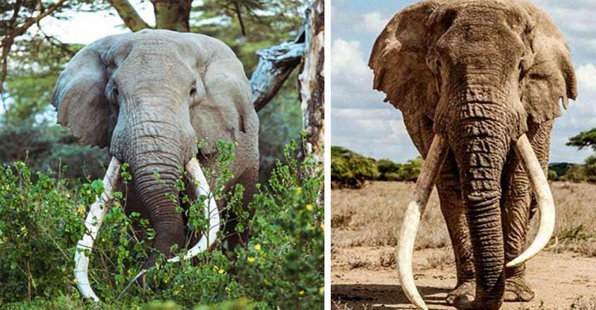 tim-elephant-death