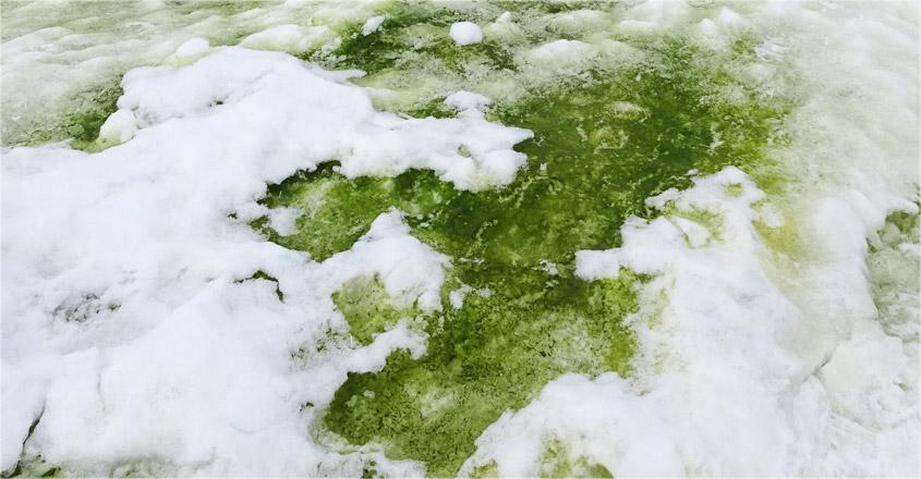 antartica-green