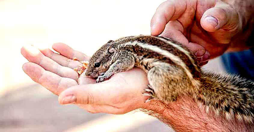squirrel-usa