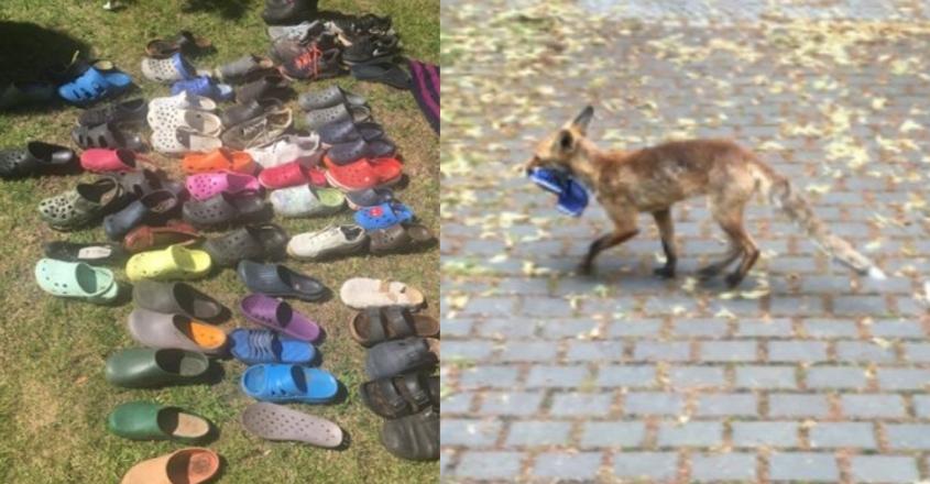 fox-sandal