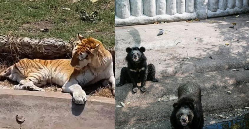 thailand-animal-zoo