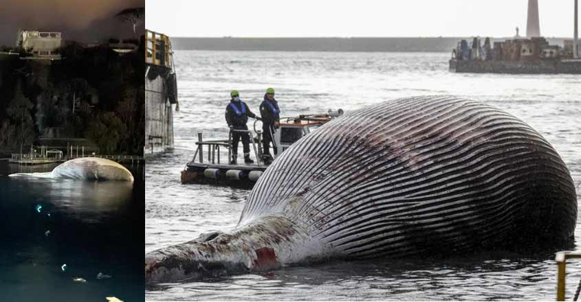 italy-whale
