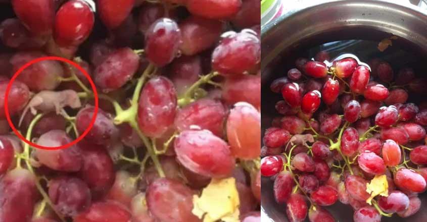 grapes-rat