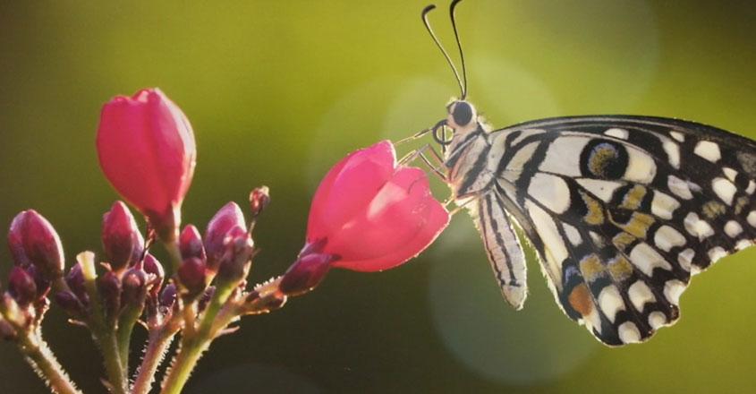 GTW-Butterfly-03