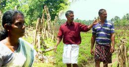 കണ്ണീർപാടത്ത് പ്രളയം ബാക്കിവച്ച കർഷക സ്വപ്നങ്ങൾ