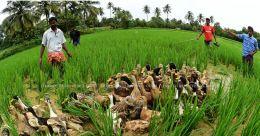 കർഷകരെ പ്രോത്സാഹിപ്പിക്കാൻ കേന്ദ്ര,സംസ്ഥാന സർക്കാരുകൾ; നിരവധി ആനുകൂല്യങ്ങൾ