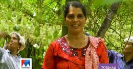 ഇത് കൂട്ടായ്മയുടെ വിജയം ; ചൗചൗ കൃഷിയിൽ നേട്ടം കൊയ്ത് ബിന്ദു