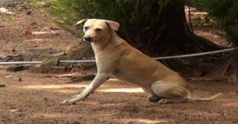 stray-dog-kollam