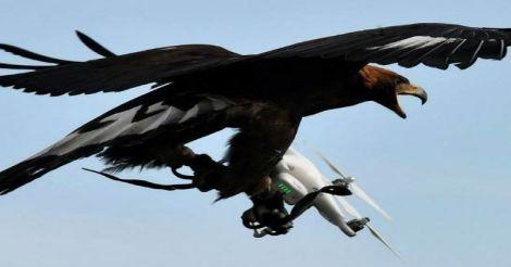 drone-eagles