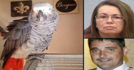 parrot-victim