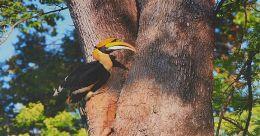 ഫൊട്ടോഗ്രഫിയും വഴങ്ങുമെന്ന് തെളിയിച്ച് ഇൻഫോപാർക്കിലെ ഐ ടി ജീവനക്കാർ