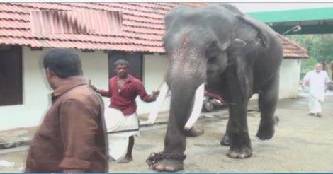 elephant-neyyantinkara2
