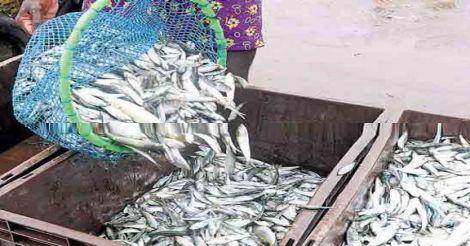 oman-fish