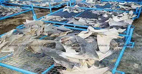 ernakulam-sharks-market
