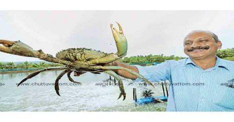 kannur-crab
