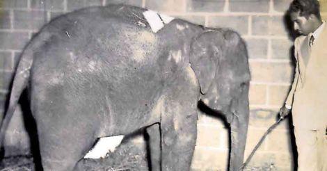 movarghese-ambika-elephant.jpg.image.786.410