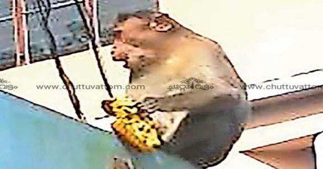 kottayam-monkey